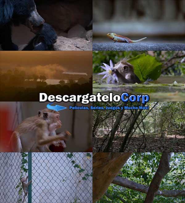 Descargar El Reino de los Monos DVDRip Latino
