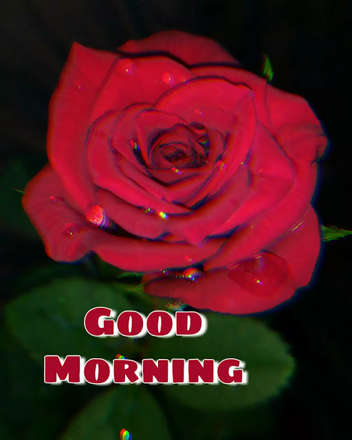 pictures of good morning flowers