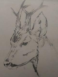 Deer face Pencil sketch