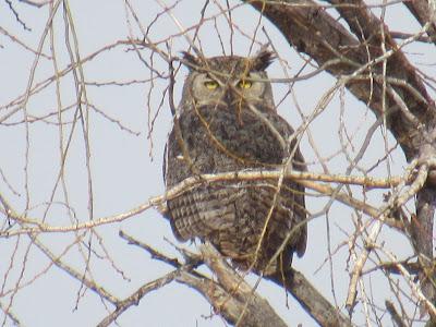 Lower Klamath Wildlife Refuge