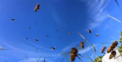 Τρακαρίσματα μελισσών: Ο μαγικός τους κόσμος σε ένα VIDEO