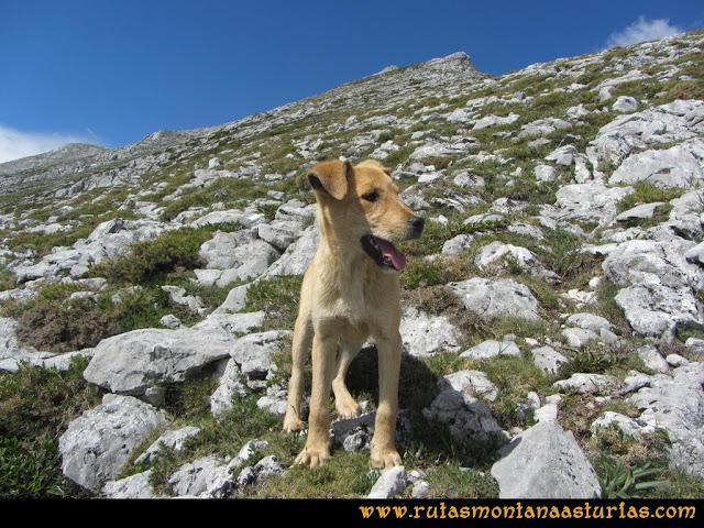 Ruta Lindes - Peña Rueda - Foix Grande: Cachorro