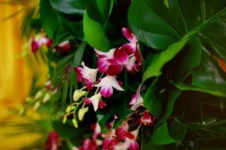 президиум с орхидеями