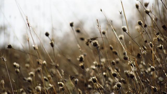 Hierbajos secos