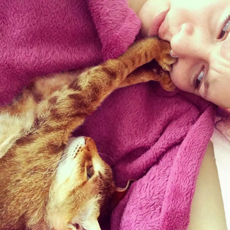 Haustier zähmen Katze verwöhnen Katze liebt mich nicht Haustiere im Bett Katzenliebe Katze weckt mich Katze lässt sich nicht streicheln