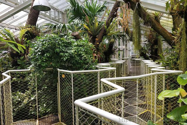 Canopy Walk in Meise Botanic Garden