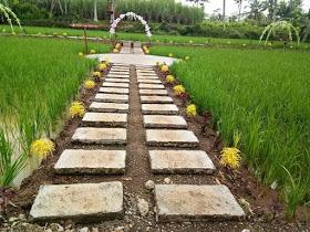Suasana alam pedesaan yang begitu indah di kanan kiri terdapat tanaman padi yang hijau terpampang luas di tempat wisata Argopuro Garden Jember