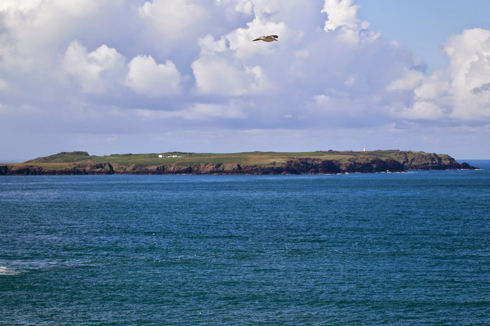 Skomer from the mainland