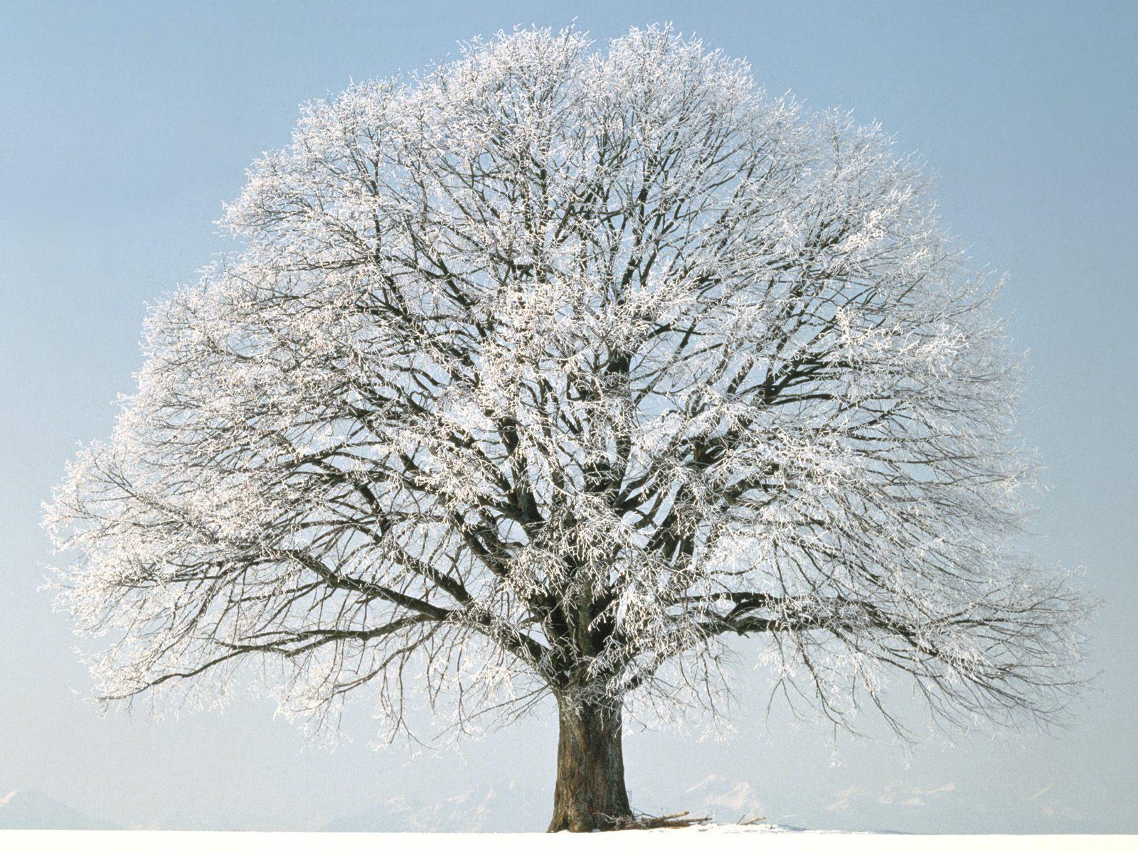 https://1.bp.blogspot.com/-tdCW4V1CnWM/TamPXoplC_I/AAAAAAAACqY/AV45AvZTsF0/s1600/winter+scenes+1+%25288%2529.jpg