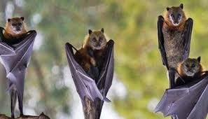 Indonesia: Bat soup is still in use