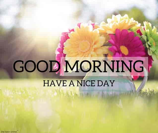 150 Beautiful Good Morning Images Best Collection