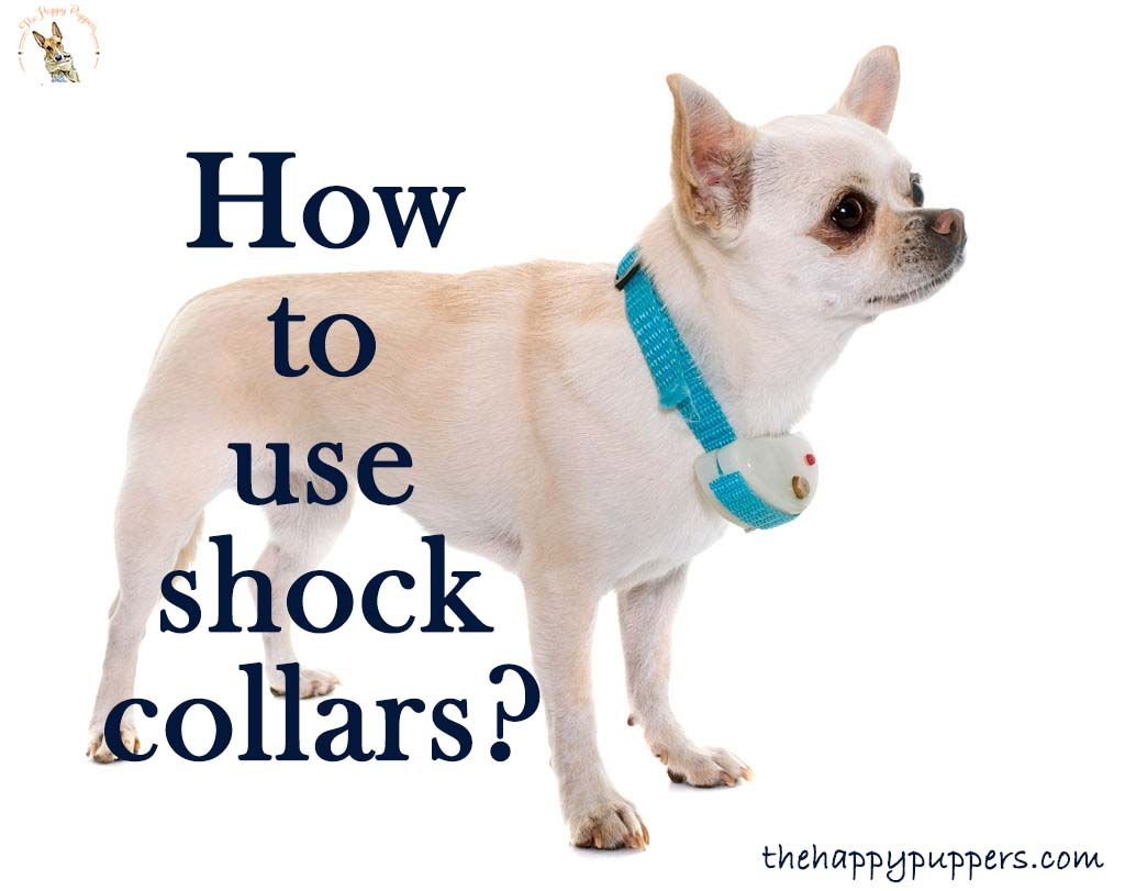 How to use shock collars?