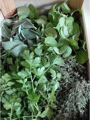 coltivare erbe aromatiche nell'orto