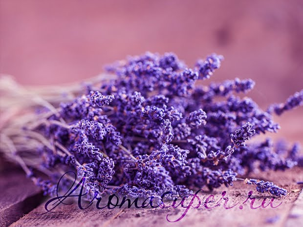armelle_The Hypnotizing Beauty Of Harvesting Lavender
