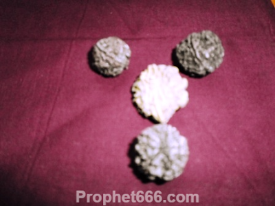 Rudraksha Beads for Water Therapyto cure Coughs, Colds and Headaches