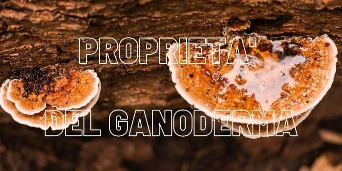 Proprietà Del Ganoderma