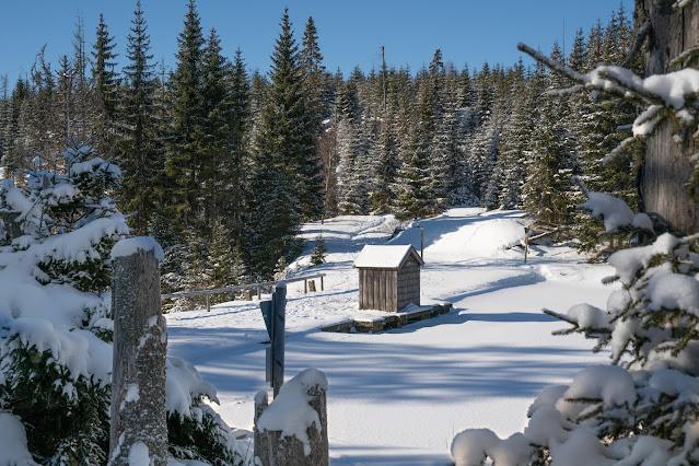 Winterwandern Mauth-Finsterau  Reschbachklause – Siebensteinkopf  Nationalpark Bayerischer Wald 11