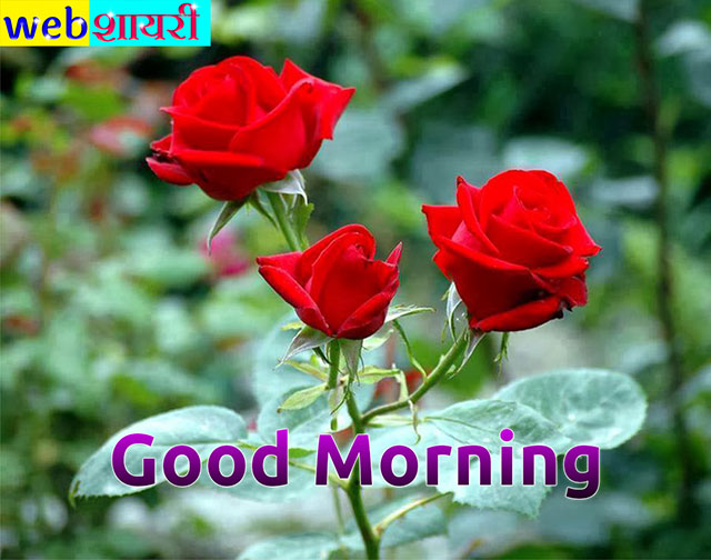 good morning love red roses images,colorful rose good morning images,