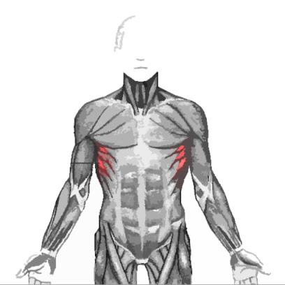 Músculo serrato anterior resaltado de color rojo
