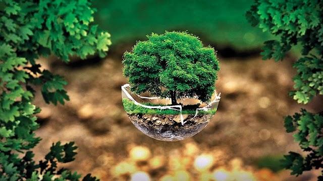 Surat Untuk Presiden, Selamatkan Generasi Kami dari Krisis Ekologi