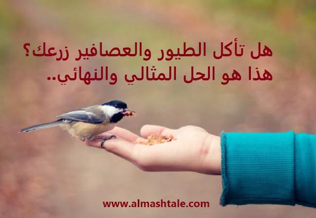الحل المثالي و النهائي لمشكلة أكل الطيور للنباتات والثمار