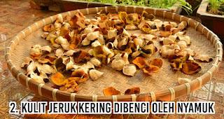 Kulit jeruk kering Dibenci Oleh Nyamuk