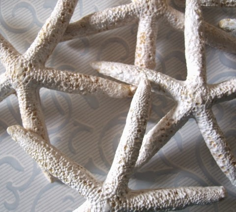 clay starfish