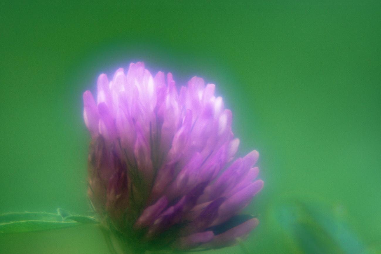 Brillenglasobjektiv #5 — Kleeblüte