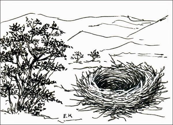 nidos de aves Yal