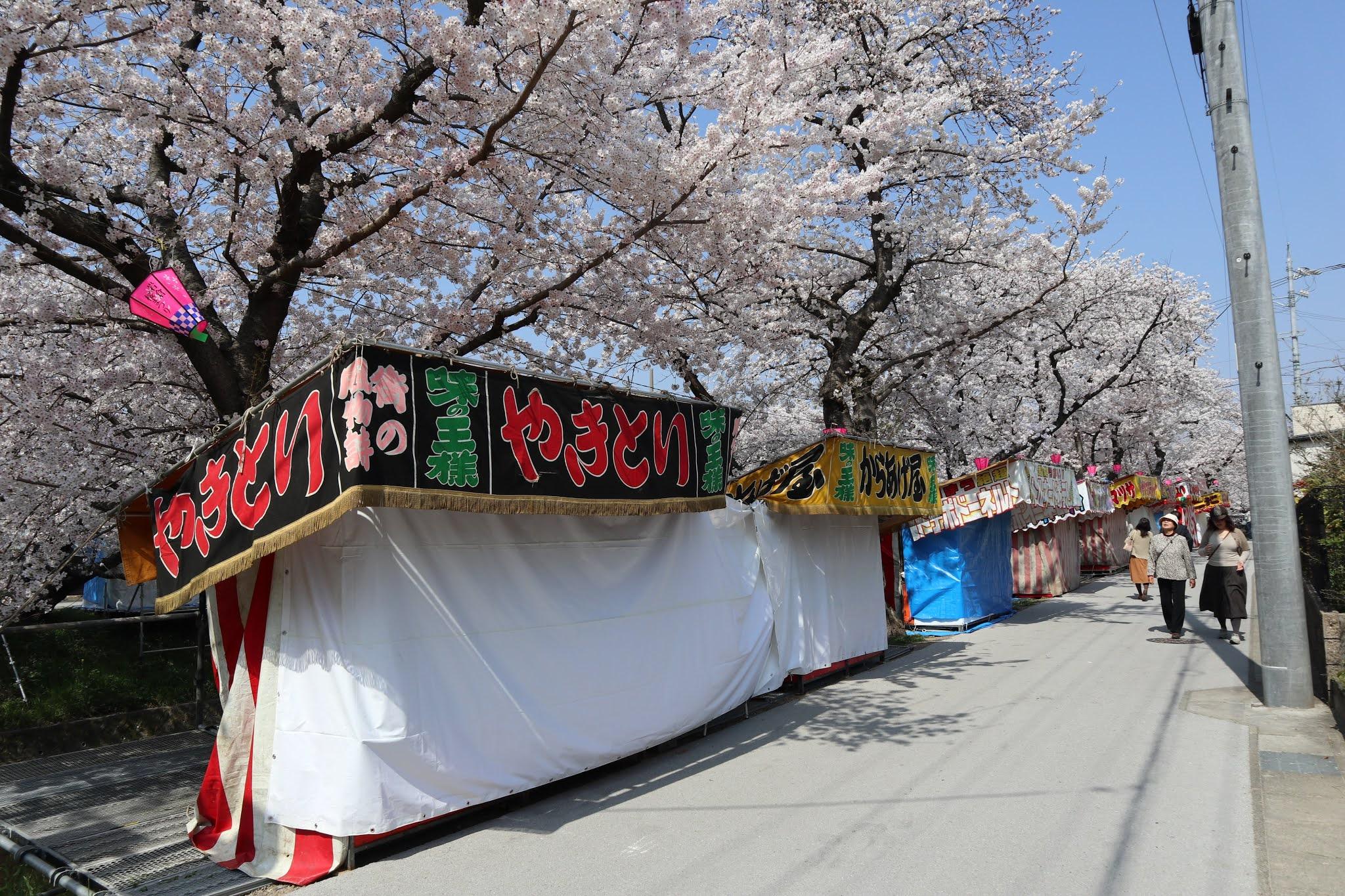 岩倉桜まつり7