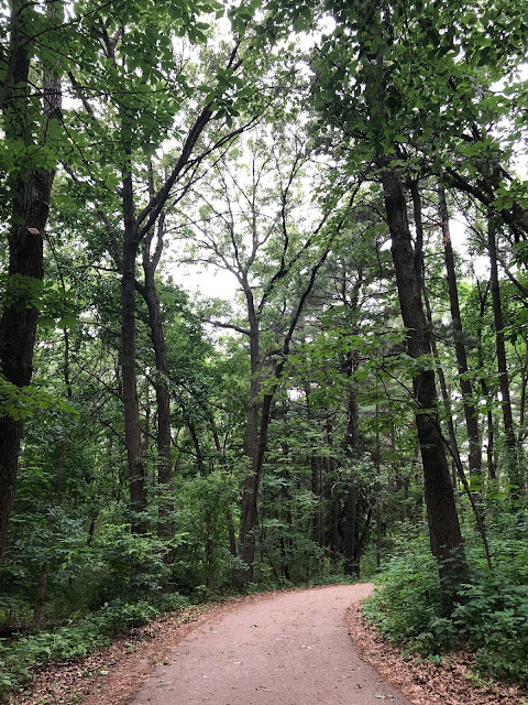 A paved trail arches through the dense woodlands at Lakeshore Nature Preserve in Madison, Wisconsin.