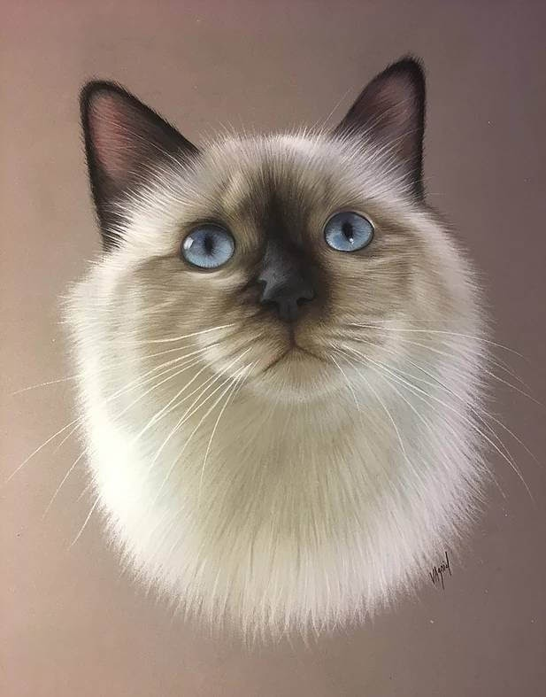 03-Birman-Sacred-Cat-of-Burma-Virginie-Agniel-Pastel-Drawings-of-Cats-and-Dogs-www-designstack-co