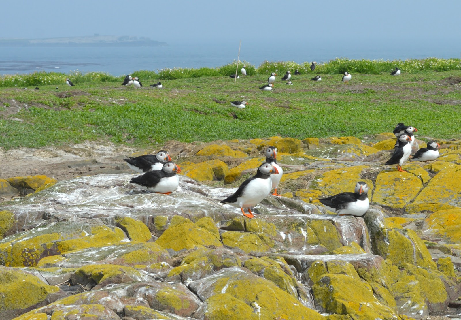 National Trust in the North East - Farne Islands