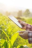 era digital, pertanian, budidaya tanaman, usaha pertanian, lmga agro