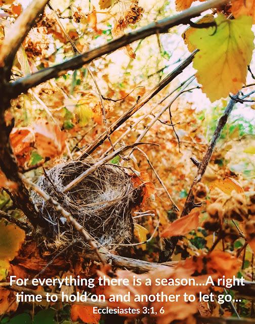 Devotion on Having an Empty Nest