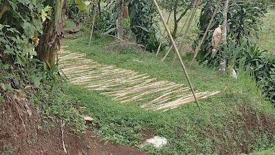 penjemuran bahan bilik bambu