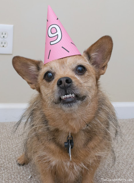 Jada the dog wearing a birthday hat
