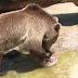 ΣΤΟΝ ΚΑΥΣΩΝΑ! Πώς προστατεύουν τα ζώα στους ζωολογικούς κήπους