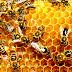 Fakta Unik Tentang Lebah Madu