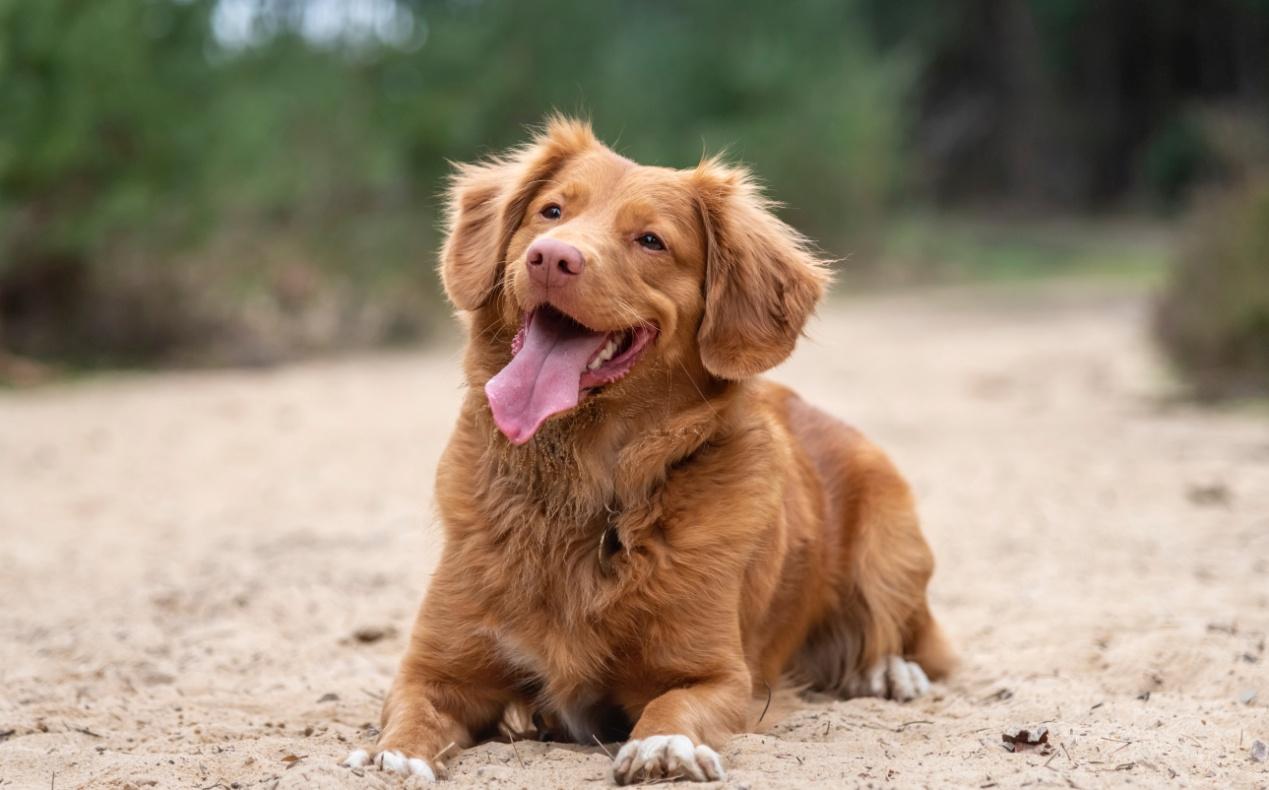 Ξύλινο σπιτάκι σκύλου – Άνεση και κομψότητα για το κατοικίδιο σας