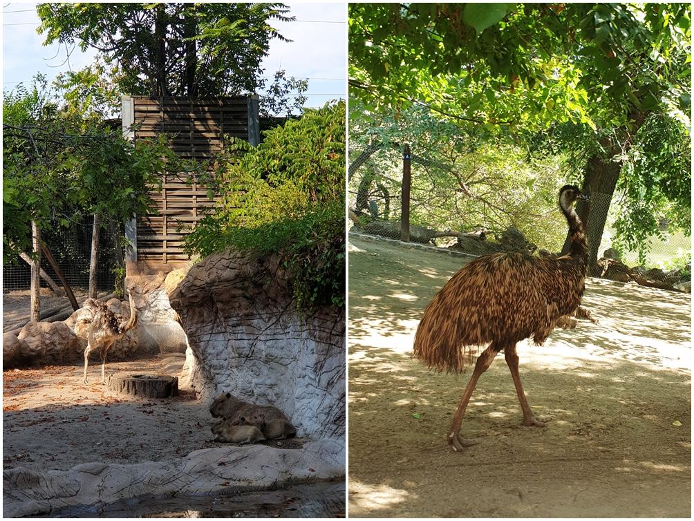 zoo w budapeszcie