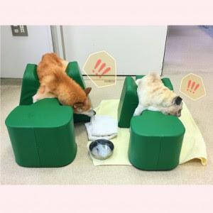 fralda para cães