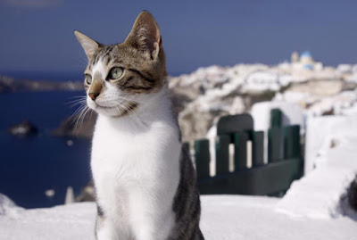 Ras Kucing Aegean