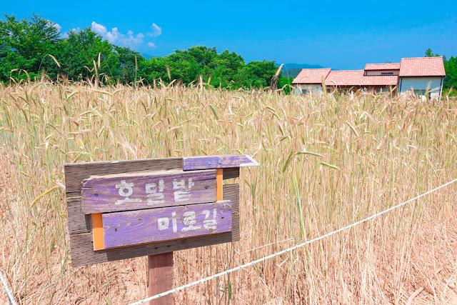 photo_1593398150.jpg