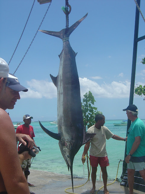 Blue Marlin Fishing - What it Takes to Do It