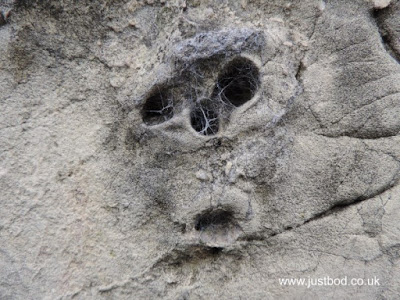 Face in one of the stones of York walls