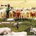 Anti-open grazing: Miyetti Allah threaten to increase the price of cow to N2 million naira each.