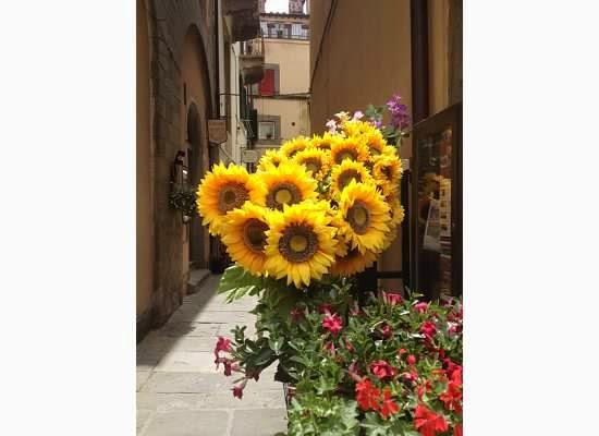 Sunflowers-Cortona-Italy