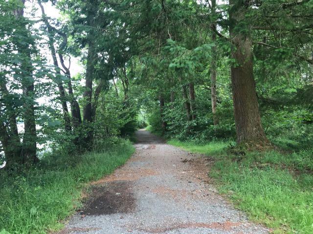 Lakeshore trail Windermere