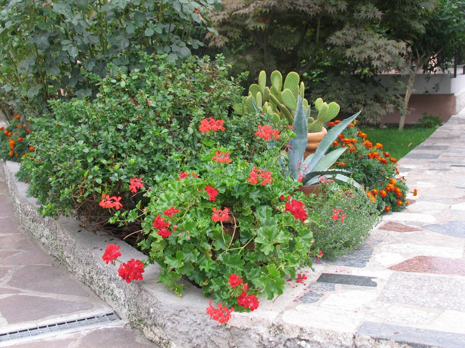 La magia di un piccolo orto giardini e ricordi - Piccoli giardini fioriti ...